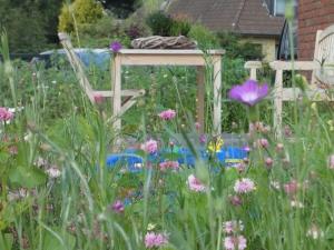 Gartenbepflanzung - Blumenwiese aussäen in Wentdorf