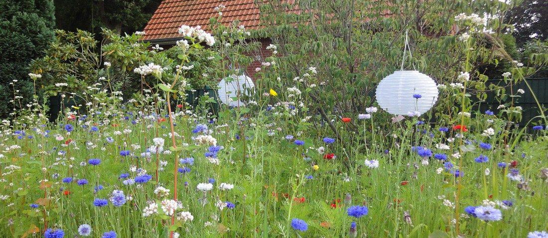 Gartenbepflanzung - Blumenwiese in einem naturbelassenem Garten