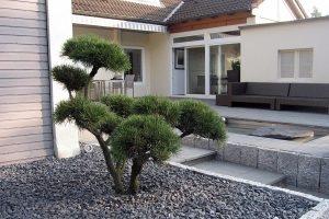 Baumpflege - Kiefernbonsai in Kiesfläche
