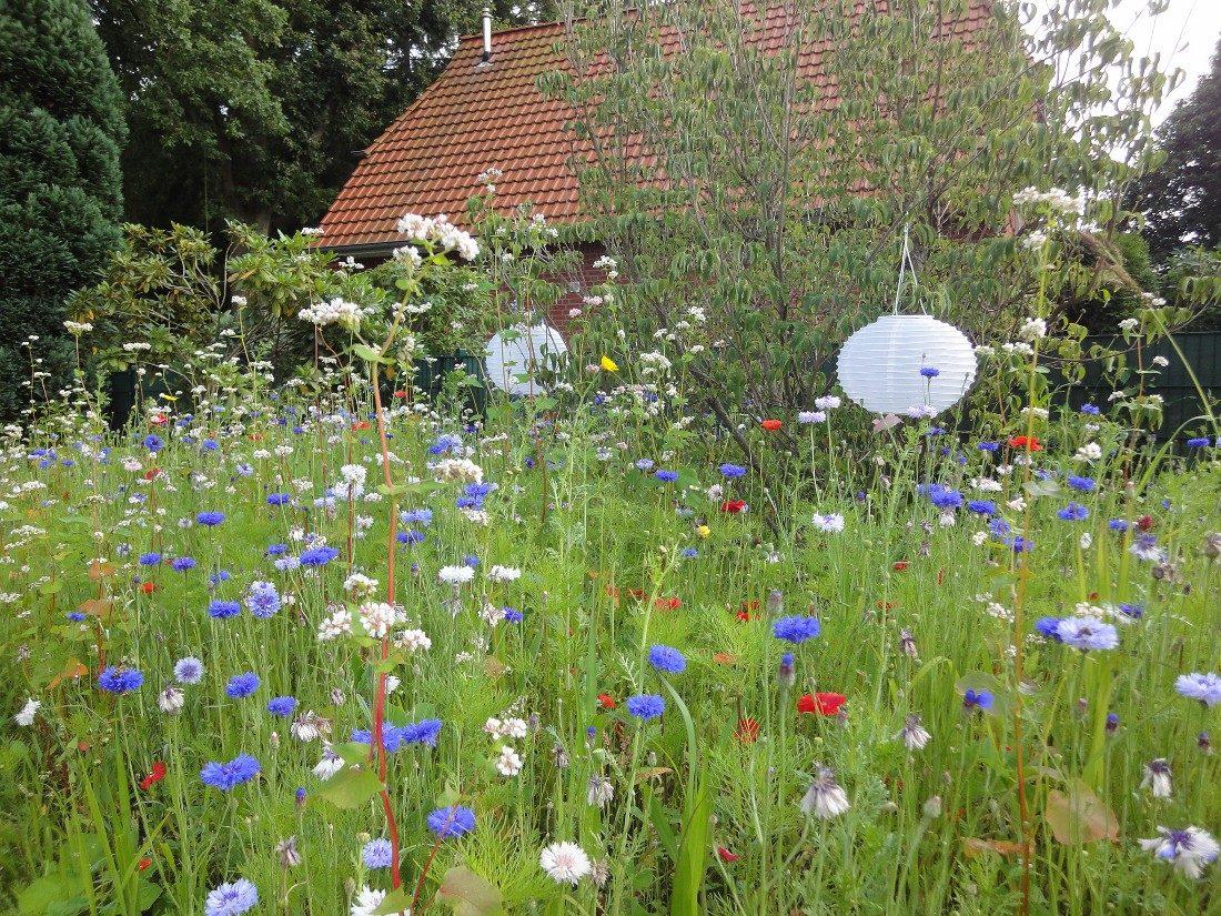 Lampion in einer Blumenwiese