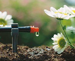 Automatische Tröpchenbewässerung in Bad Segeberg