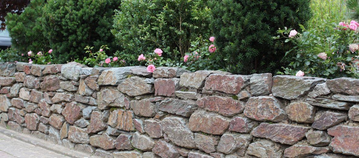 Natursteinmauer mit Rosen und Eiben in Hamburg