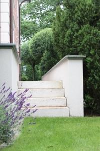 Baumpflege - Taxus, Eibe, Lavendel