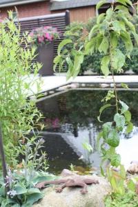 Teich mit Knöterrich in Ahrensburg