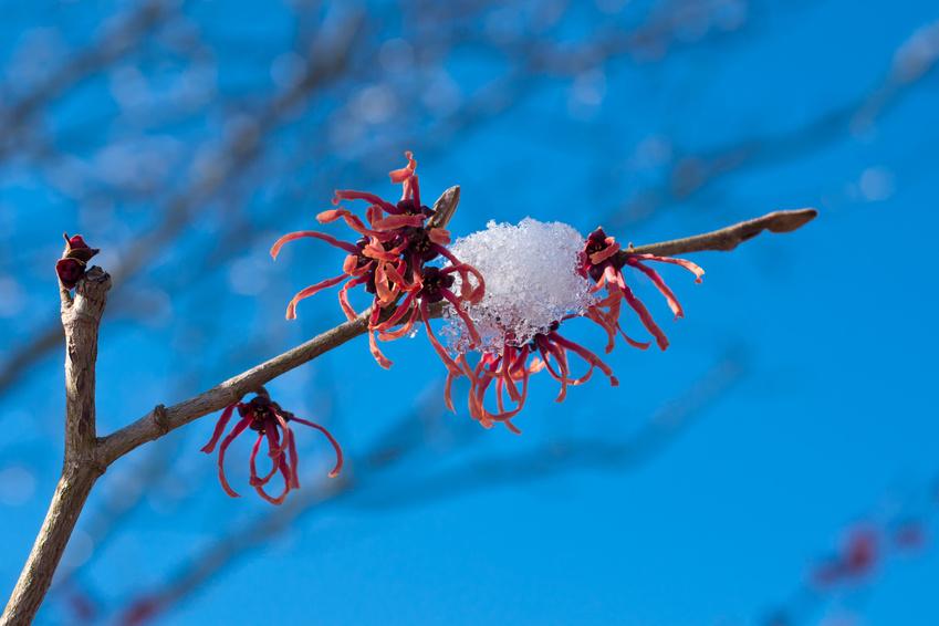 gartentipps für den winter › reinhard schäfer | garten- und, Garten und erstellen