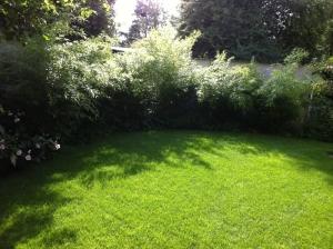 Rasenpflege - Satt grüner Rasen in Lütjensee